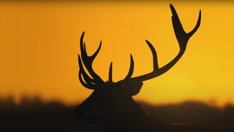 Expansive Worlds Adds New TruRED Beta Feature To Adjust Scoring In theHunter: Call Of The Wild